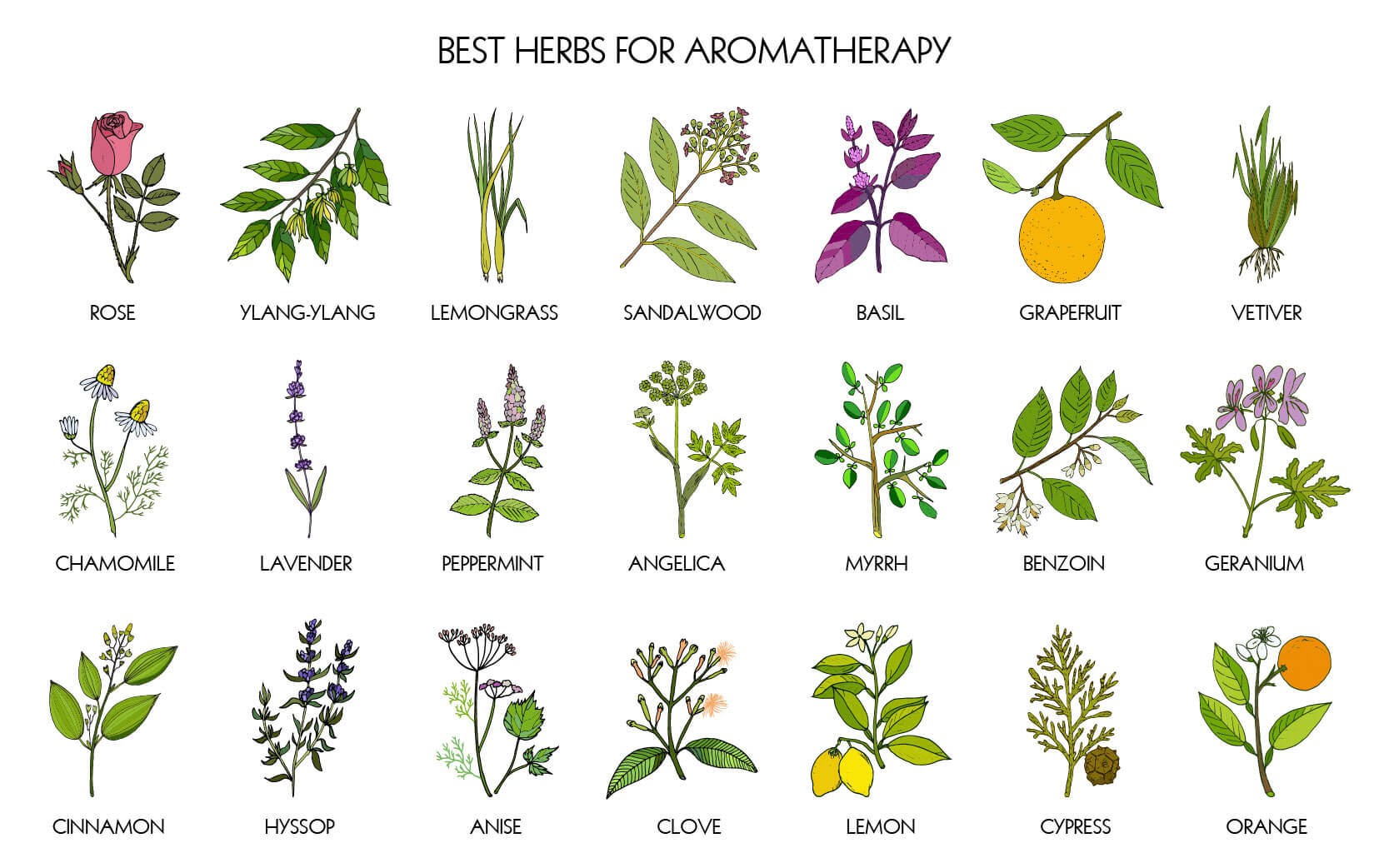 Illustration of different herbs for aromatherapy