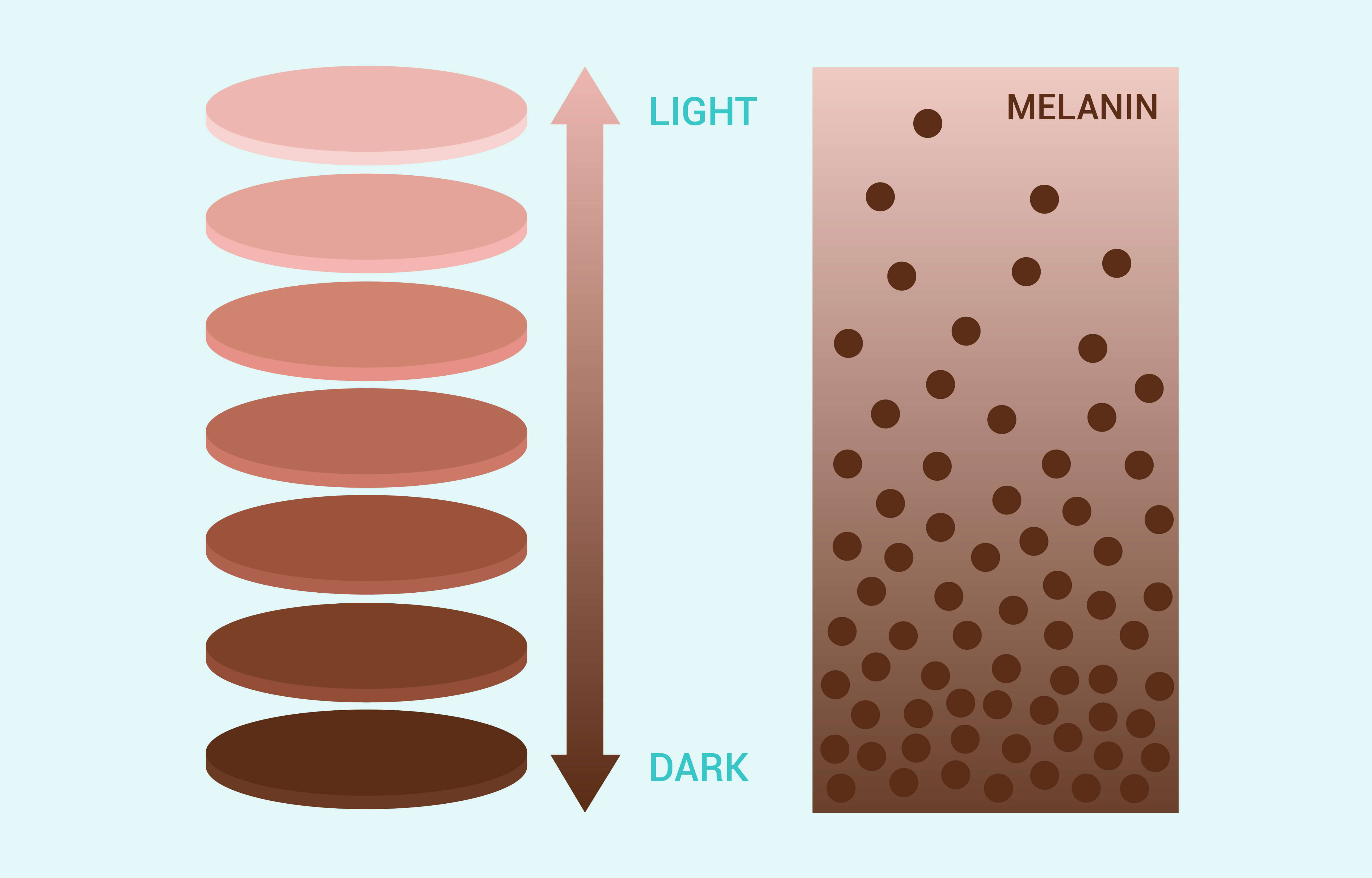 Infographic on melanin and skin tone