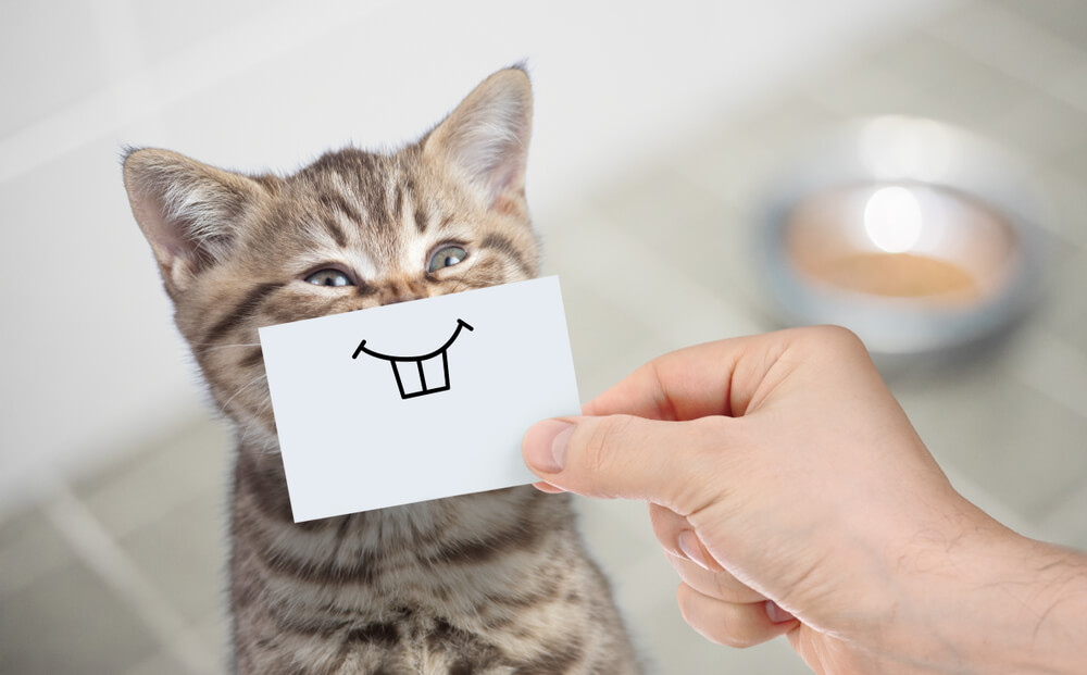 Hand holding drawn smile over cat